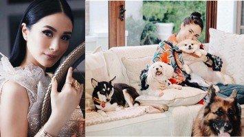 Heart Evangelista gets furious over animal cruelty on Twitter
