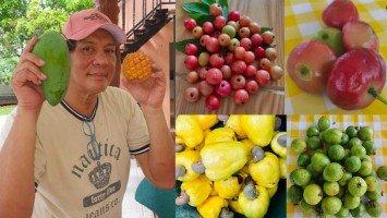 Pika's Pick: Joey Marquez flaunts fruit harvest from his probinsya farm
