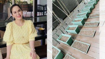 Pika's Pick: Jinkee Pacquiao is the latest celebrity gardening convert