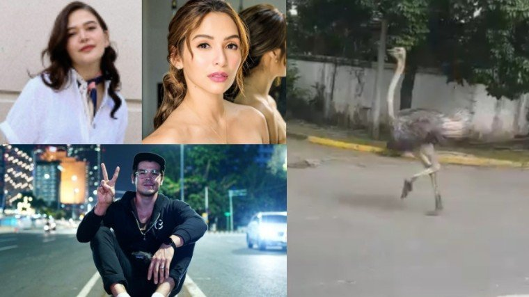 After news broke out that an ostrich is running loose in Quezon City, celebrities Bela Padilla, Jennylyn Mercado, and Erwan Heussaff react to such with witty tweets!